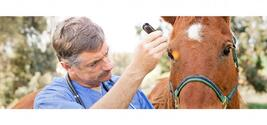 thumbnail Horse Insurance: Yes or No?